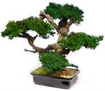 Large Monterey Artificial Bonsai Tree Preserved Bonsai Trees