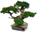 Large Monterey Artificial Bonsai Tree Preserved Bonsai Trees